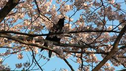 An Abundance of Crows